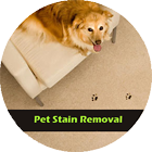 Pet Stain Removal Vancouver, WA